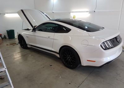 Mustang stripes - white with black (1) (Medium)